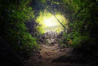 Fototapet Naturlig tunnel i tropisk djungel skogsväg väg igenom frodig, lövverk och träd av vintergröna tät regnskog Mystisk magisk bakgrund