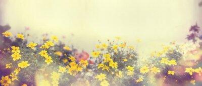 Fototapet Olika färgglada vårblommor i solljus, oskärpa, banner för hemsidan, gräns