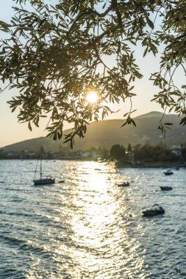 Fototapet Olivträd, havet och solnedgången