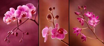 Fototapet Orchidea tryptyk w fioletach