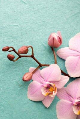 Fototapet Orkide.
