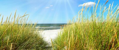 Fototapet Östersjön - sanddyner och hav