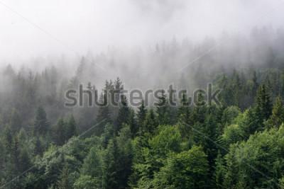 Fototapet Översikt över Evergreen Forest - Toppar av höga gröna träd med tät dimma Rolling In Over Lush Wilderness