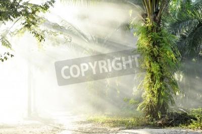 Fototapet Palm Fog Light Farm Day Outdoor