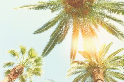 Fototapet palm och solsken