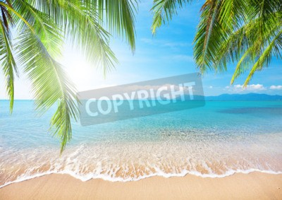 Fototapet Palm och tropisk strand