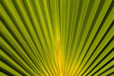 Fototapet palme