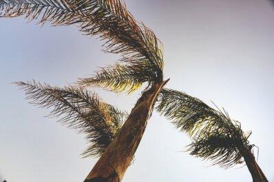 Fototapet palmer