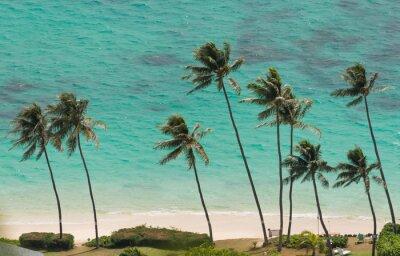 Fototapet Palmer på stranden i Waimanalo, Hawaii