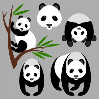 Fototapet panda