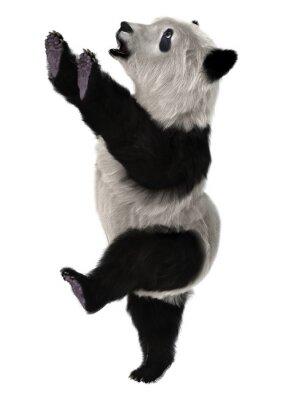 Fototapet Panda Bear Cub