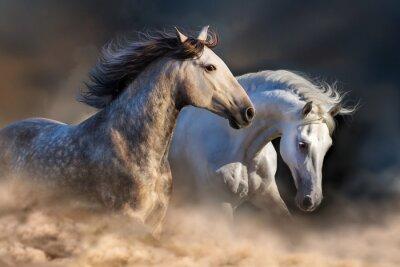 Fototapet Par häst kör i damm vid solnedgången ljus