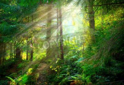 Fototapet Parkera. Vacker dimmig gammal skog