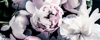 Fototapet Pastel peony flowers as floral art background, botanical flatlay and luxury branding design