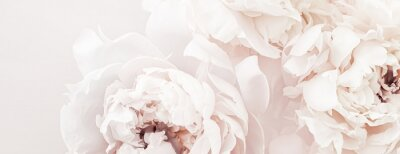 Fototapet Pastel peony flowers in bloom as floral art background, wedding decor and luxury branding design