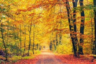 Fototapet Pathway i höstskog