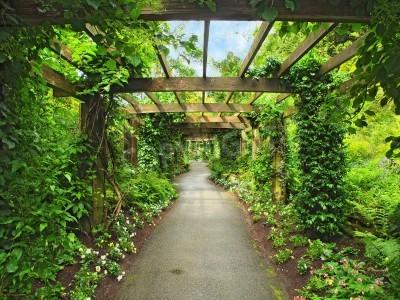 Fototapet Pergola passage i trädgården, omgiven av blåregn och klätterväxter