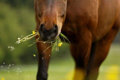 Fototapet Pferdemaul äter