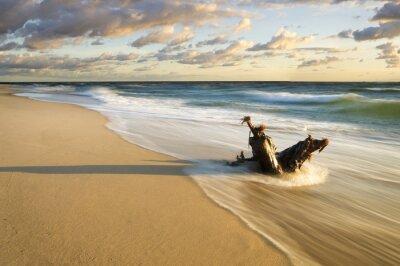 Fototapet Pien wyrzucony na Morska plaze