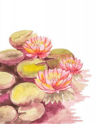 Fototapet Pink lotuses with brown-green leaves, top right blank background for an inscription, watercolor handwork.