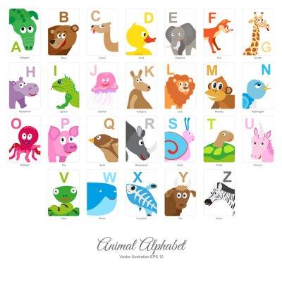 Fototapet Platt alfabet djur