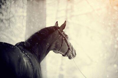 Fototapet Porträtt av en sport häst