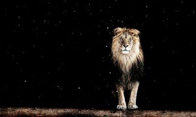 Fototapet Porträtt av en vacker lejon, geometriskt mönster