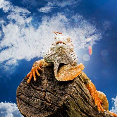Fototapet porträtt av makro skott på iguana huvud