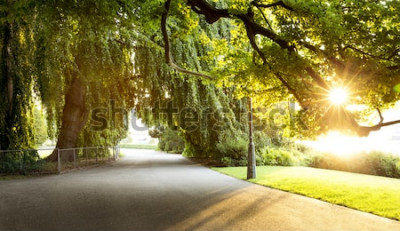 Fototapet Promenad i en vacker stadspark