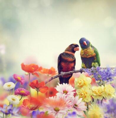 Fototapet Rainbow Papegojor (regnbågelorikeet)
