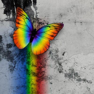 Fototapet regnbåge fjäril