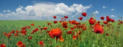 Fototapet röd vallmo och himmel med moln