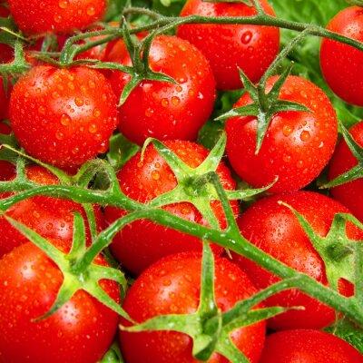 Fototapet röda tomater