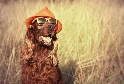 Fototapet rolig hund