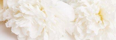Fototapet Romantic banner, delicate white peonies flowers close-up. Fragrant pink petals