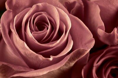 Fototapet Ros blommor närbild