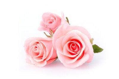 Fototapet rosa blomma på vit bakgrund
