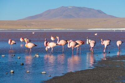 Fototapet Rosa flamingos på