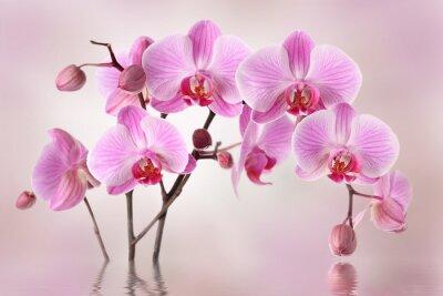 Fototapet Rosa orkidéer blomma bakgrund design