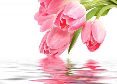 Fototapet Rosa tulpaner med vatten reflektion och textutrymme