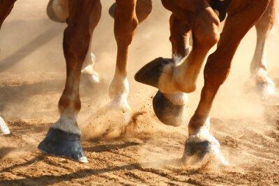 Fototapet Running hästar hovar