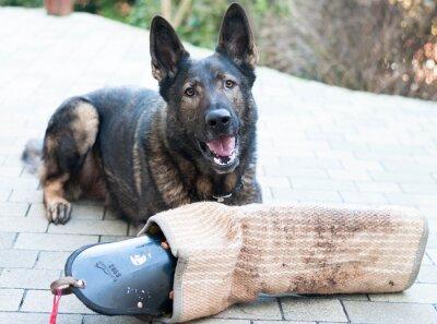 Fototapet schutzhund