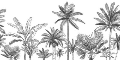 Fototapet Seamless horizontal tropical background. Hand drawn palm trees, sketch exotic tropic jungle leaves and paradise palm tree vector wallpaper illustration. Exotic palm tree botanical, rainforest foliage