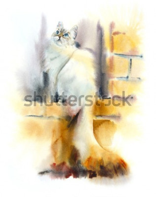 Fototapet Siberian cat sits on the window. Watercolor hand drawn illustration