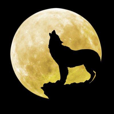 Fototapet Silhuetten av en varg framför månen
