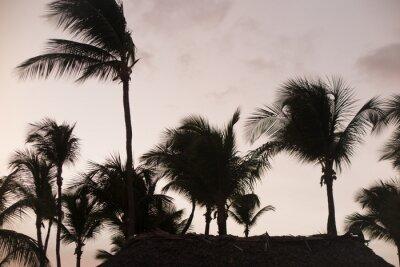 Fototapet Silhuettpalmer vid vacker solnedgångstid