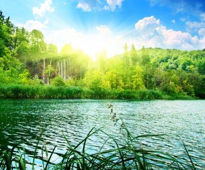 Fototapet sjö i djup skog