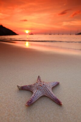 Fototapet Sjöstjärna på stranden