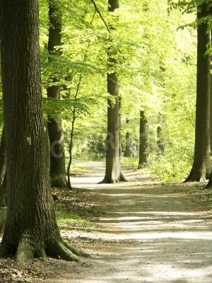 Fototapet skog