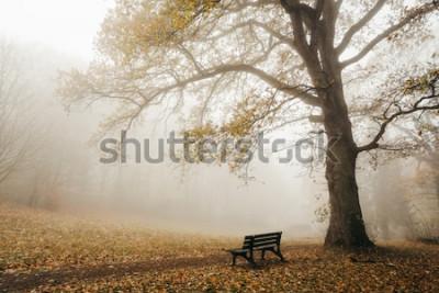 Fototapet Skog i höststemning med dimma och sol